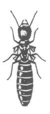 A Termite King