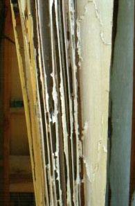 A Termite Damaged 2x4