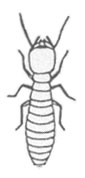 Termite Worker Graphic