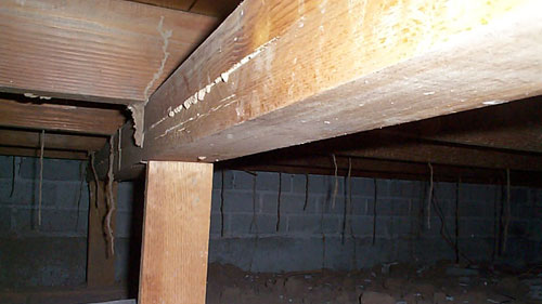 Termite Mud Tubes under a House
