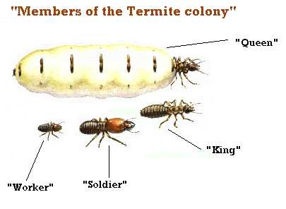 biology lab on termites Olivia johnson biology 101 lab section 014 termite lab report september 9, 2012 termites c period your lab write up is to be submitted through blackboard & turnitin.