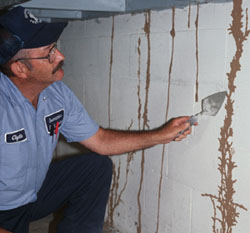 Get Regular Termite Inspections