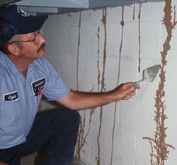 Get Regular Termite Inspections